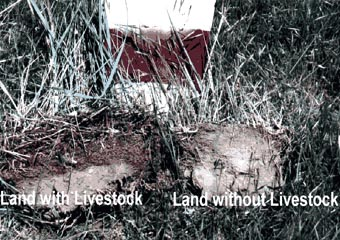 Growing soil with livestock compaired to land without livestock.