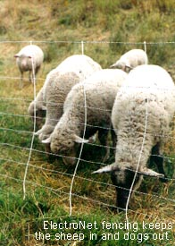 Electric sheep fence, ElectroNet.