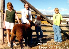 Children with black ram sheep.
