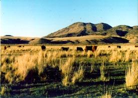 Disperse grazing not trampling standing dead grasses.