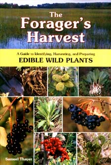 How do you identify edible wild plants?