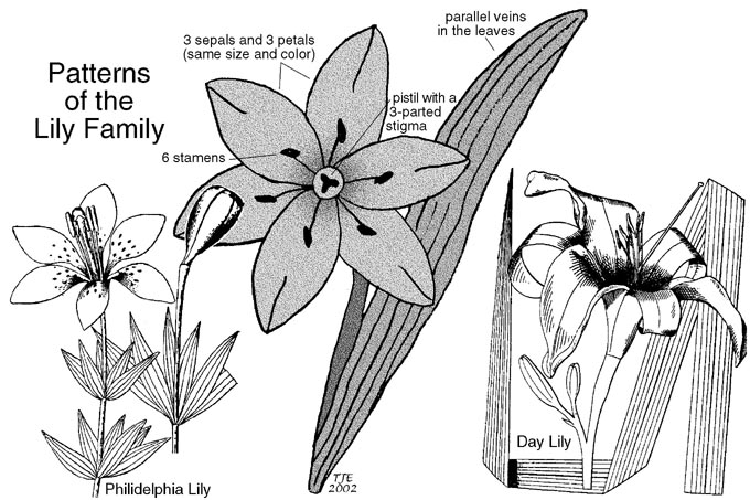 Learning to Identify Plants by Families  Article by Thomas J